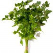 Bunch of fresh green curly parsley — Stock Photo