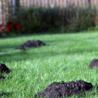 Molehills in an english garden — Stock Photo #40803707