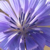 Macro purple flower — Stock Photo
