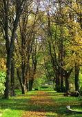 Park w jesieni — Zdjęcie stockowe