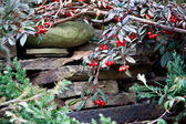 Branches of bushes with red berries on a stone staircase — Stock Photo