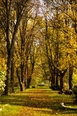Beautiful scenery in a park in autumn — ストック写真