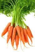 Carrot — Stock Photo