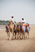 Camel racing — Stock Photo