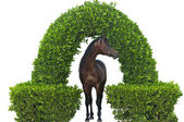 Horse under the arch isolated — Stock Photo