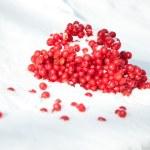 Viburnum branch in the snow — Stock Photo