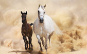 Two Arabian Horses running in desert storm — Stock Photo