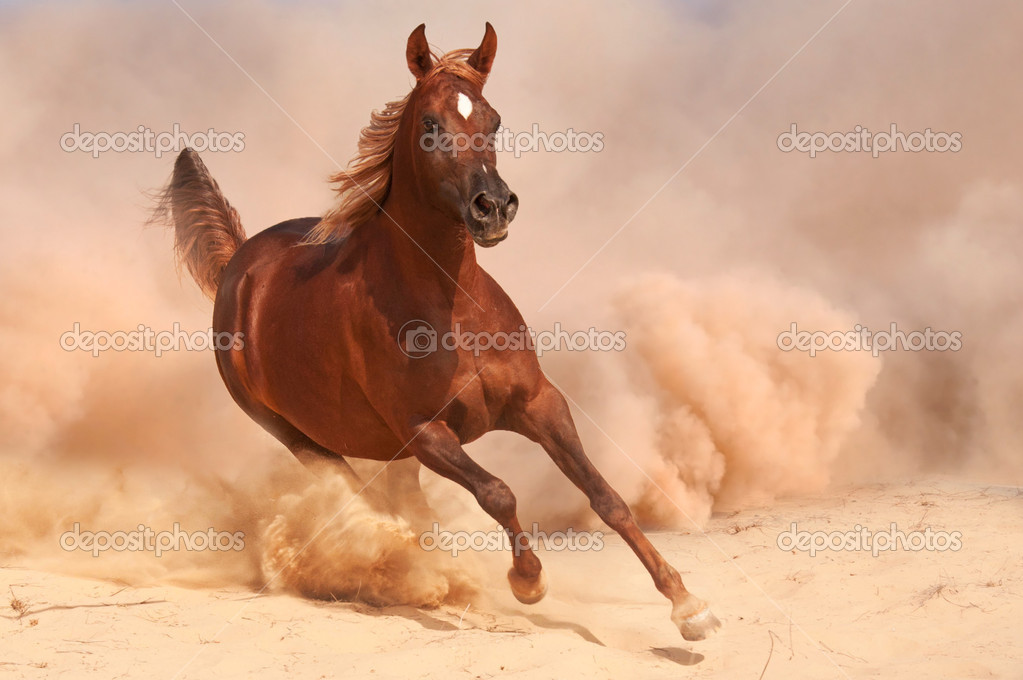 Purebred arabian horse running in desert — Stock Photo ...