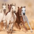 Horses in sand dust — Stock Photo