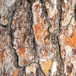 Tree crust — Stock Photo