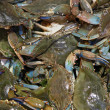 Small crabs - Stock Photo