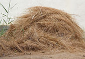 Hay pile — Stock Photo