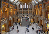 Natural History Museum — Stock Photo