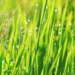 Grass and Morning Rain Drops — Stock Video