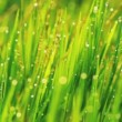 Grass and Morning Rain Drops — Stock Video #15319009