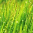 Grass and Morning Rain Drops — Stock Video #15319483
