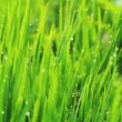 Grass and Morning Rain Drops — Stock Video #15319677