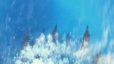 Dolphins swimming underwater — Stock Video