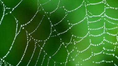 A moist cobweb — Stock Video