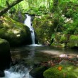 Stock Video: Tropical Waterfall