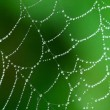 A moist cobweb - Photo