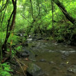 Stream in Jungle - Photo