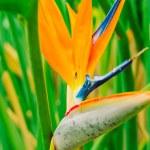 Vibrant Tropical Flower — Stock Photo