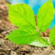 Green Plant, New Life — Stock Photo