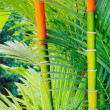 Tropical Plants - Stock Photo