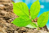 Green Plant, New Life — Stock Photo