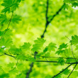 Natural Green Background — Stock Photo #29970411