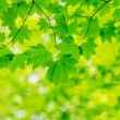 Natural Green Background — Stock Photo #29970435