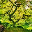 Amazing Green Tree — Stock Photo #29970557