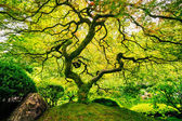 Amazing Green Tree — Stock Photo