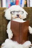 Hond leesboek — Stockfoto