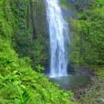 Tropical Jungle Waterfall In Hawaii — Stock Video #38596367