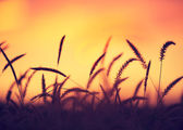 Sunset Field — Stock Photo