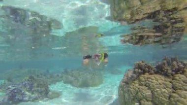 Woman swimming underwater — Stock Video