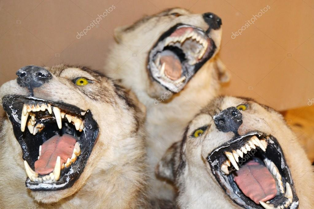 Russian Wolf  Stockfoto #12093555