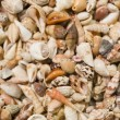 Stock Photo: Shell collection in group