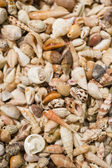 Shell collection in group — Stock Photo