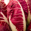 Italian chicory, radicchio, Cychorium intybus - Stock Photo