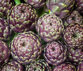 Globe artichoke, Cynara cardunculus — Stock Photo