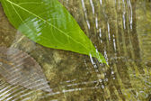 Leaf on flowing water — Stock Photo