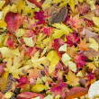 Bed of Autumnal leaves — Photo