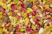 Bed of Autumnal leaves — Stock Photo