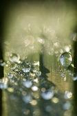 Dew dropps on grass — Photo