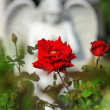 Rose and angel - Stockfoto