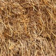 Golden straw texture background — Stock Photo