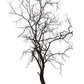 Tree on a white background in high definition — Stock Photo